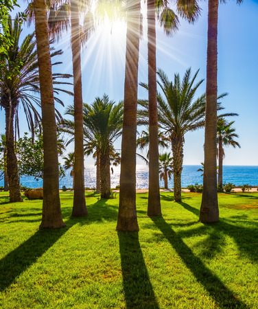 Dazzling sunset. Holiday on an island in the Mediterranean Sea. Picturesque palm grove on the beach. The concept of luxury holiday seashore Stok Fotoğraf