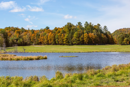 Golden Autumn in Canada. Pretty shallow lake surrounded by trees yellowed. Safari Park