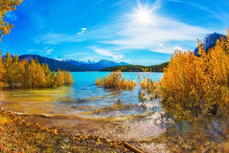 Inundación del lago de otoño. En el famoso lago artificial de Abraham se refleja el follaje dorado de álamos y abedules. Brillantes colores azul y oro. Concepto de turismo activo, ecológico y fotográfico