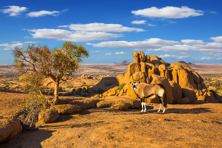 Travel to Africa. Picturesque stones in the Namib desert. Long-legged Oryx antelope. The concept of active, extreme and photo-tourism