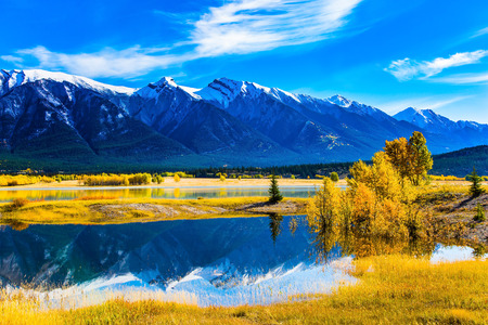 Golden Autumn in the Canadian Rockies. The famous artificial Abraham lake reflects the golden foliage of aspen and birches. Concept of active, ecological and photo tourism