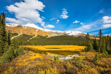 Marshy lake in the Rocky Mountains. The mountains are covered in the snow. Autumn in Canada.  The concept of ecotourism Фото со стока