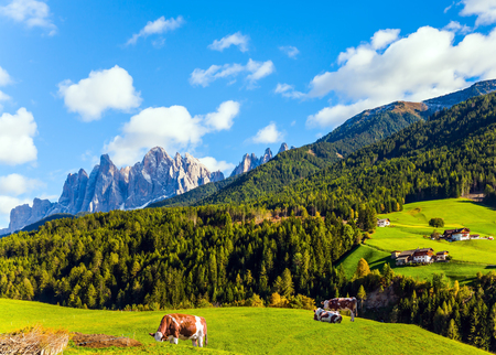 Delightful mountain valley in the Dolomites. Farm cows graze on the green slopes of the mountains. The concept of ecological and photo tourism