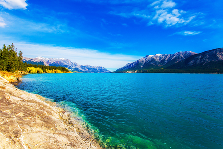Golden Autumn in the Canadian Rockies. Smooth water of the Abraham lake, the golden foliage of aspen and birches is reflected. Concept of active, ecological and photo tourism Imagens