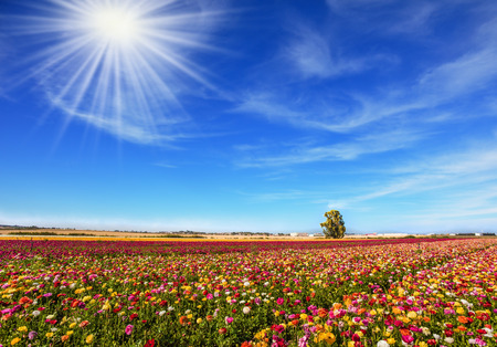 Bright sun warms wonderful flowers. The picturesque field of flowering colorful buttercups. Concept of active and ecological tourism Stock Photo