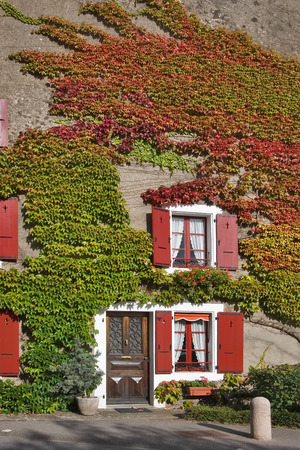 A window with red jalousie and branches of an ivy on a wall of the house in settlement Verdon