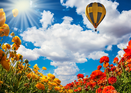 The hot spring sun shines among the lush cumulus clouds. The splendor of flowering multicolored buttercups. Early spring in Israel. Balloon flies over the flower field. The concept of artistic photography
