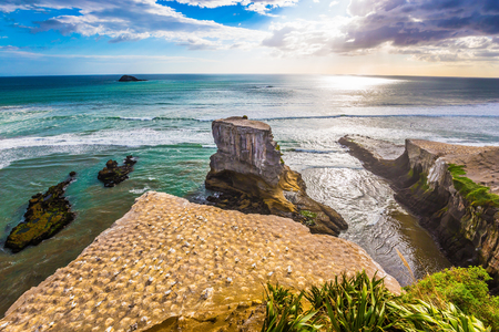 Awesome beautiful coast of the North Island of New Zealand. Nesting colony of rare seabird gannets. Concept of active and ecological tourism Reklamní fotografie - 121036324