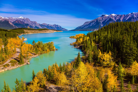 Golden Autumn in the birch and aspen groves on shores of Abraham Lake. Mountain valley in the Rocky Mountains of Canada. Concept of active, ecological and phototourism