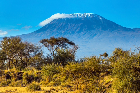 Desert acacia in the savanna. The famous volcano Kilimanjaro with a snowy peak. Safari - tour to the Kenya Amboseli Reserve. The concept of exotic, ecological and phototourism