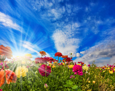 Multi-colored flowers on high stalks are shaken on easy spring wind. The blue sky and light clouds are illuminated by the warm spring sun. The concept of artistic photography