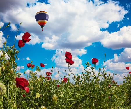 Début du printemps en Israël. Champ d'anémones en fleurs de la famille des renoncules. Nuages luxuriants adorables dans le ciel bleu. Un énorme ballon multicolore survole le champ de fleurs. Concept de tourisme actif, rural et photo