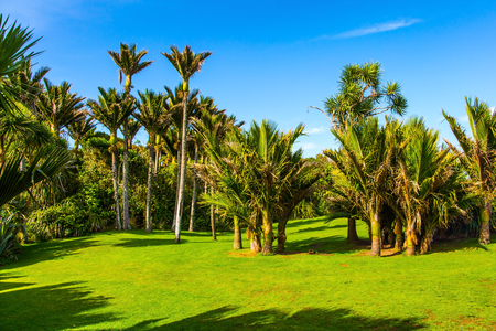 South Island in New Zealand. Summer day in February. Green grass lawn in palm grove. Travel to an exotic country. The concept of ecological, exotic and photo tourism
