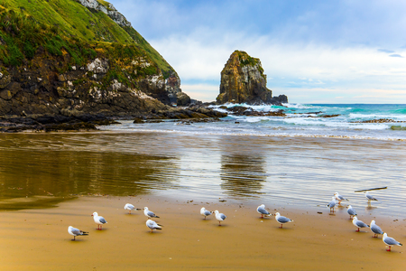Flock of cormorants resting in the sand. Cannibal Bay on the South Island, New Zealand. Wide beach with white sand and blue-green water. The concept of ecological, active and phototourism
