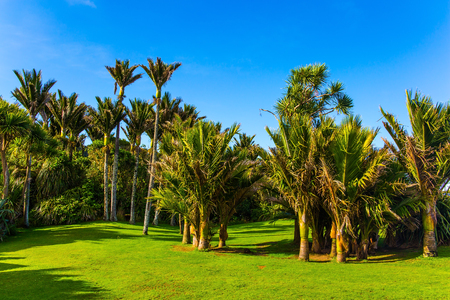 Picturesque meadow in a palm grove. Sunny summer afternoon. South Island in New Zealand. Travel to an exotic country. The concept of ecological, exotic and photo tourism Stok Fotoğraf - 123356376