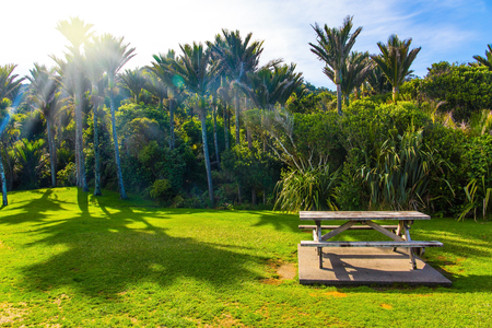 Table and benches for a picnic on a sunny meadow. Tall palm trees in a palm grove. Travel to an exotic country New Zealand. The concept of ecological, exotic and photo tourism Stok Fotoğraf - 123356719