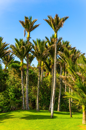 Summer day in February. South Island in New Zealand. Adorable green grass lawn in palm grove. Travel to an exotic country. The concept of ecological, active and photo tourism Stok Fotoğraf - 123356870