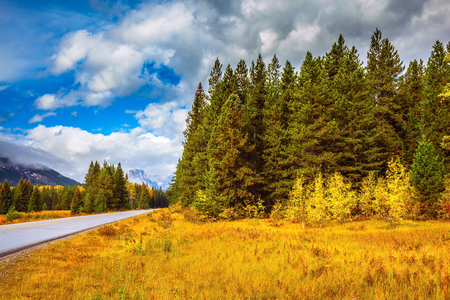 Golden Autumn in Banff National Park. Highway among orange grass and evergreen trees. Canada Rockies 写真素材