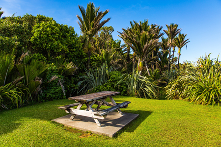 Table and benches for a picnic on a sunny meadow. Travel to an exotic country New Zealand. Tall palm trees in a palm grove. The concept of ecological, exotic and photo tourism Stok Fotoğraf - 123373997