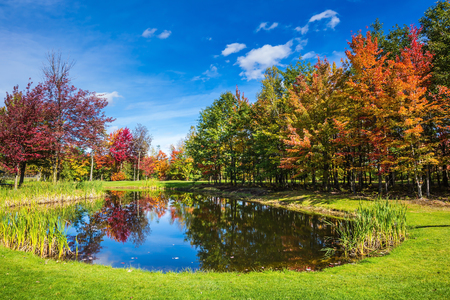 Charming oval pond in the picturesque park. Shining day in French Canada. Concept of recreational tourism. Autumn foliage reflected in clear water of the pond
