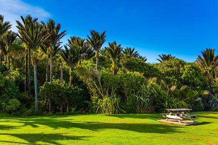 Adorable green grass lawn in palm grove. Coast of the Pacific Ocean. South Island in New Zealand. Travel to an exotic country. Sunny summer day. The concept of ecological, active and photo tourism Stok Fotoğraf - 123371366