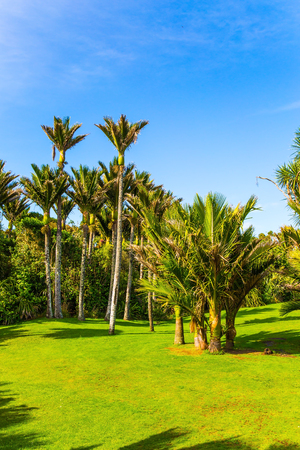 South Island in New Zealand. Summer day in February. Adorable green grass lawn in palm grove. Travel to an exotic country. The concept of ecological, active and photo tourism Stok Fotoğraf - 123356623
