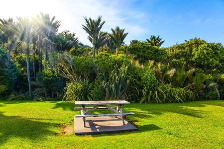 Table and benches for a picnic on a sunny meadow. Travel to an exotic country New Zealand. Tall palm trees in a palm grove. The concept of ecological, exotic and photo tourism Stok Fotoğraf - 123585357