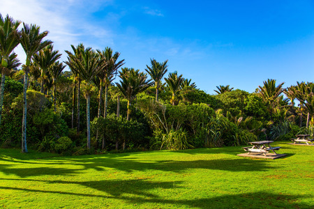 Sunny summer afternoon. Picturesque meadow in a palm grove. South Island in New Zealand. Travel to an exotic country. The concept of ecological, exotic and photo tourism Stok Fotoğraf - 123585361
