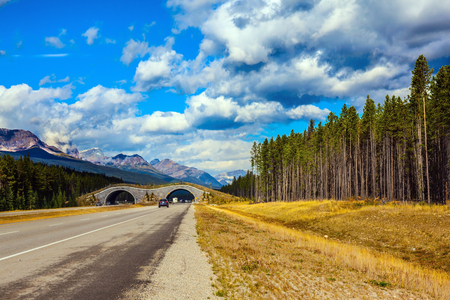 Jasper National Park, Canadian Rocky Mountains. Bridge to go wild animals across the highway