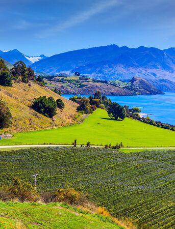 Entzückender Lake Wanaka mit türkisfarbenem Wasser. Neuseeland, Südinsel. Malerische Weinberge steigen die Berge zum Wasser hinab. Das Konzept des aktiven, ökologischen und Fototourismus Standard-Bild
