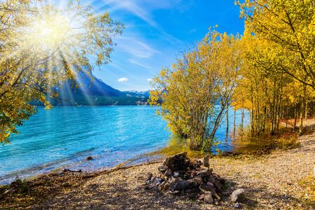 Autumn sun warms the mountain valley. Rocky Mountains of Canada, autumn flood of artificial Abraham lake. The golden foliage of aspen and birches.Concept of active and photo tourism Banco de Imagens