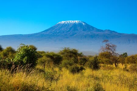 The famous snow peak of Kilimanjaro. Savanna with rare bushes and desert acacia. Amboseli Park, Kenya. The concept of active, exotic, ecological and photo tourism