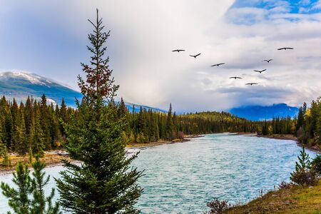 Birds and clouds are flying across the sky. Scenic autumn in the Rockies of Canada. The lake among the mountains. The concept of active, photo and eco-tourism