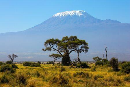 Beeindruckende Reise nach Afrika, Amboseli Park. Savanne mit seltenen Büschen und Wüstenlandschaften. Der berühmte Schneegipfel des Kilimanjaro. Das Konzept von aktiv, exotisch, ökologisch und foto Standard-Bild