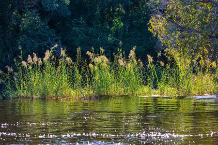 The swampy banks of the African river are overgrown with reeds. The concept of active, extreme and photo tourism