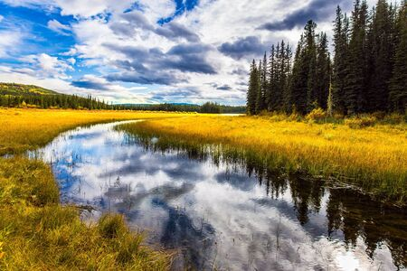 Quiet shallow lake surrounded by forest and yellow autumn grass. Smooth water reflects the cloudy sky. Rocky Mountains of Canada. The concept of ecological, active and photo tourism