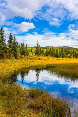 Yellow dry grass around a shallow lake. Picturesque Canadian Rockies. Coniferous evergreen trees among wetland. The concept of ecological, active and photo tourism