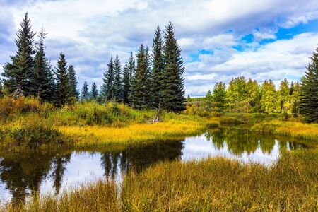 Picturesque Canadian Rockies. Yellow dry grass around a shallow lake. Coniferous evergreen trees among wetland. The concept of ecological, active and photo tourism 版權商用圖片