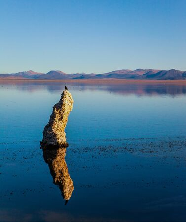 Birds on the lake. Picturesque Mono lake. The columns-remains of Tufa are fantastically reflected in the smooth water of the lake. Sunset. The concept of ecological, exotic and photo tourism
