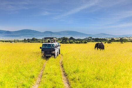 Jeep with tourists in the savannah. Huge lonely elephant grazes in the tall grass of the savannah. Afrika. The Masai Mara Reserve in Kenya. The concept ecological and photo tourism