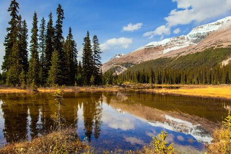 Forests and lakes in the Rockies of Canada. Shallow swamp overgrown with yellowed grass. Autumn trip to the Rockies of Canada. The concept of active, eco and photo tourism