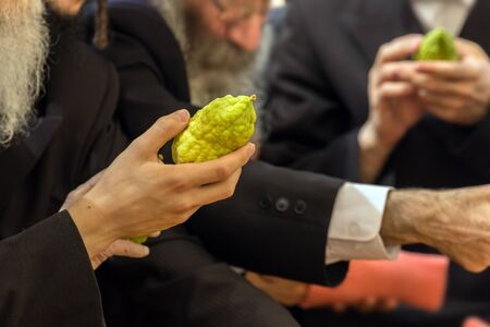 Jewish autumn holiday Sukkot - Feast of Tabernacles. Religious Jew with a gray beard chooses etrog for the holiday Sukkot. The concept of religious, ethnographic and photo tourism