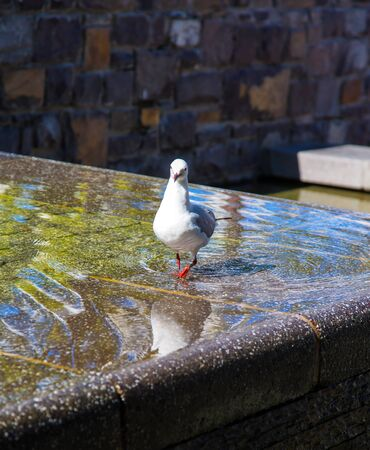Lovely seagull bathing in the fountain. Fabulous port city on the shores of two oceans. Mysterious South Africa. The concept of active, exotic and photo tourism