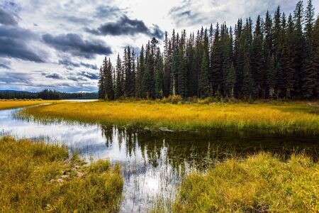 Coniferous evergreen forest among shallow lakes and swamps. Rocky Mountains of Canada. Yellow dry grass. Wetland in the forest. The concept of ecological, active and photo tourism