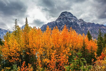 Canadian Rockies. Yellow, orange and red autumn leaves adorn the mountainous landscape. The concept of active, automotive, environmental and photo tourism Фото со стока - 134869043