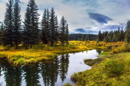 Quiet shallow lake surrounded by forest and yellow autumn grass. Rocky Mountains of Canada. Smooth water reflects the cloudy sky. The concept of ecological, active and photo tourism