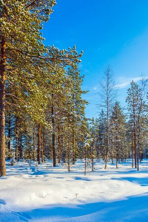 Journey to the Arctic Circle. Lapland. Snowy Christmas day. The concept of exotic and extreme travel Reklamní fotografie