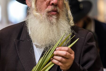 JERUSALEM, ISRAEL - SEPTEMBER 20, 2018: Sukkot Autumn Harvest holiday. Religious Jew with a gray beard chooses a lulav. The concept of religious, ethnographic and photo tourism