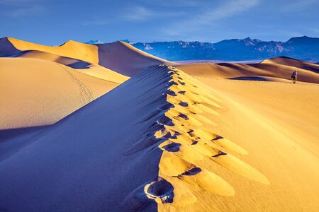 Tourist photographer with a photo bag is walking among the dunes. USA. Death Valley. Desert morning in Mesquite Flat Sand Dunes. Various traces are visible along the crest of the dune. Stock fotó