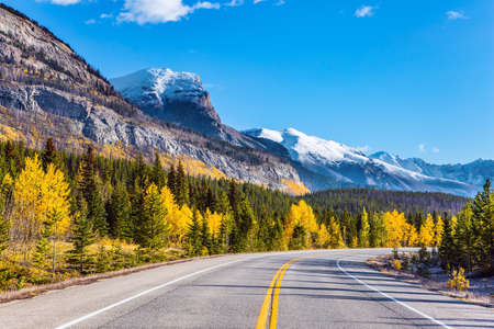 The asphalt highway goes into the distance. Indian summer in the Canadian Rockies. The first snow has already fallen on the peaks. The birches and aspens is mixed with green conifers.